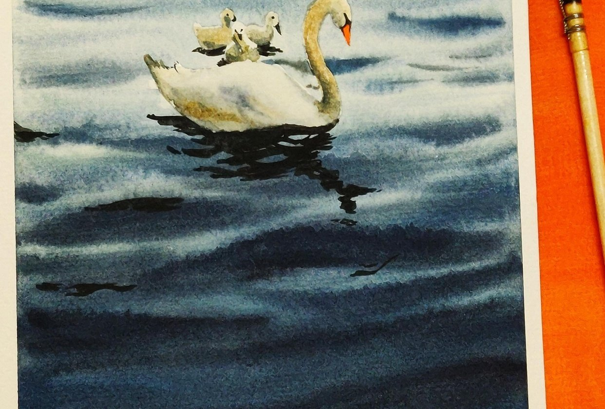 Watercolour swan Lake. - student project