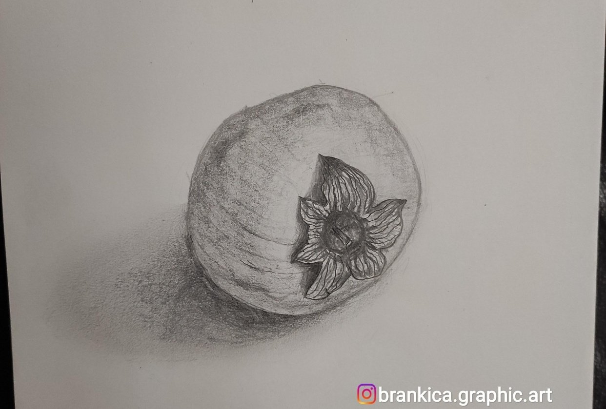 Persimmon Kaki fruit sketch - student project