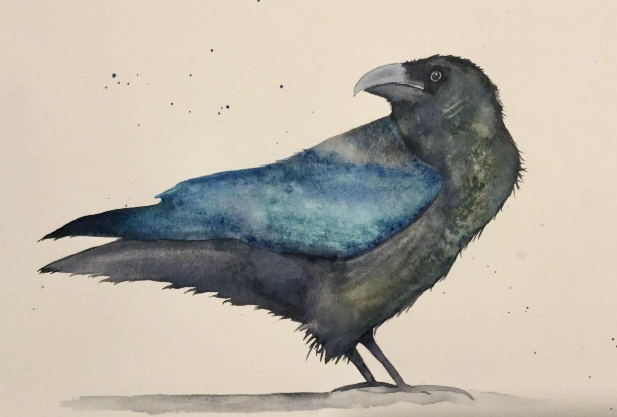 Aurelie's raven - student project
