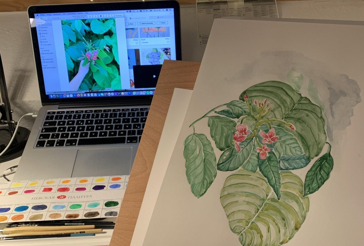 Some tropical flowers :D - student project