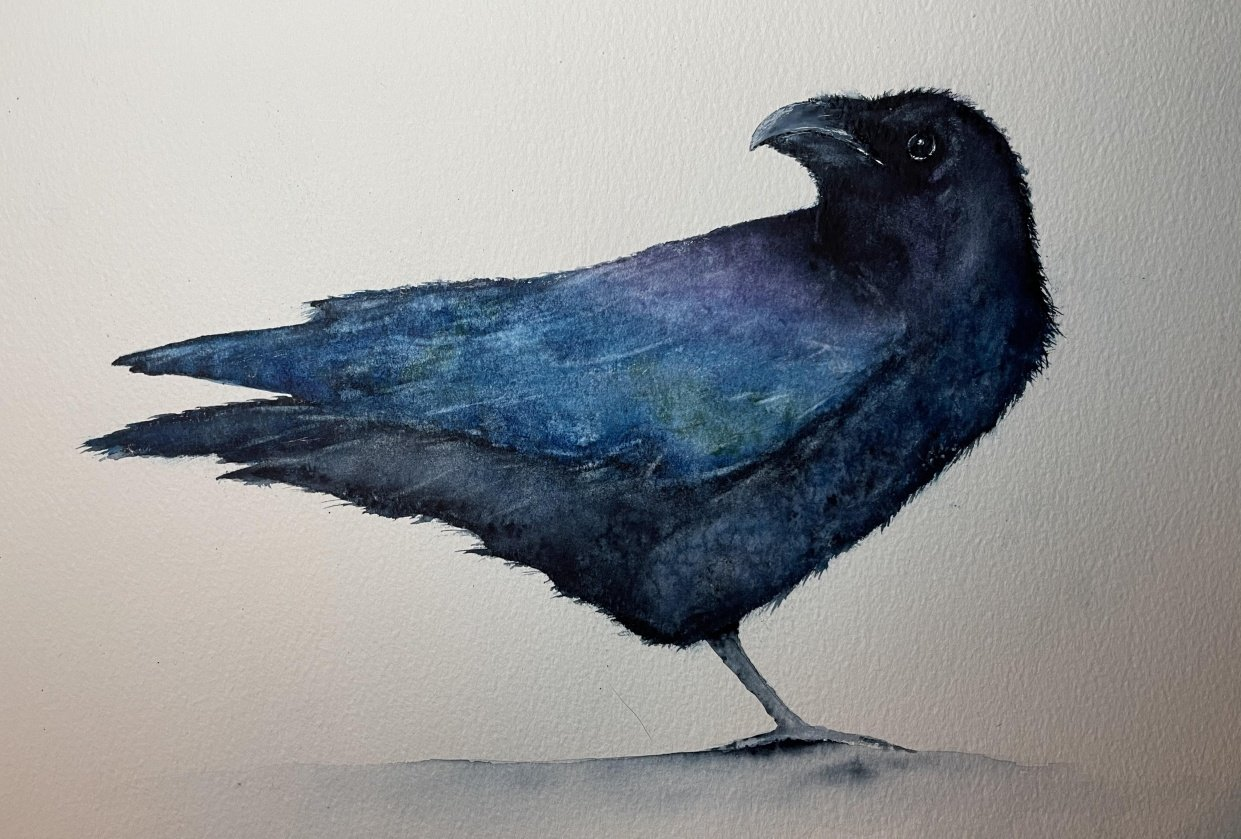 Raven - student project
