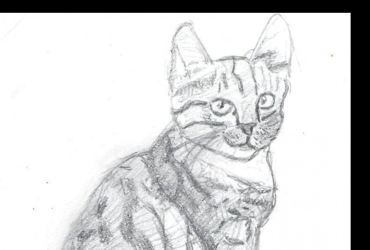 Cat Drawings - student project