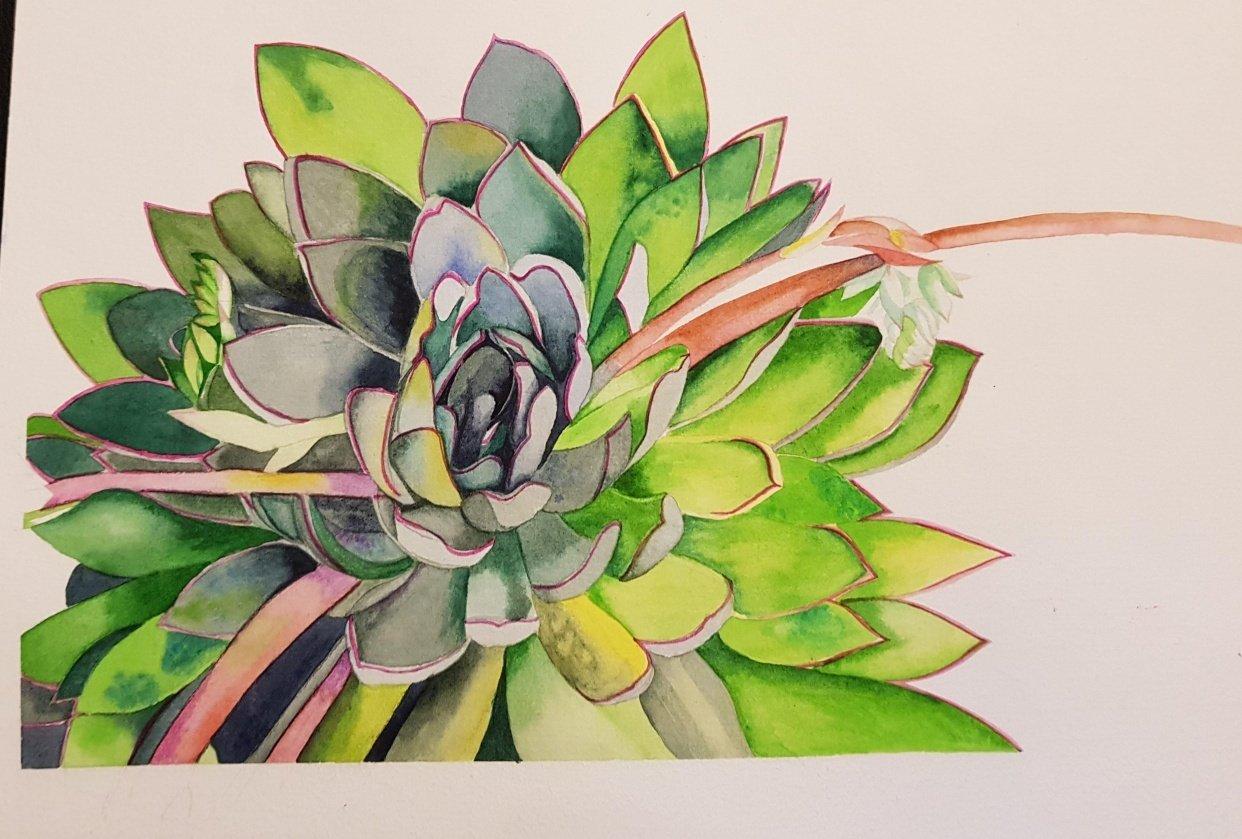 Succulent - student project