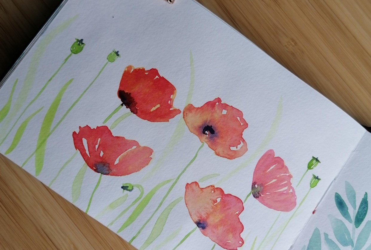 Watercolor poppy flowers - student project