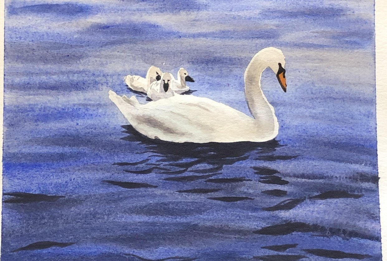 Swans! - student project