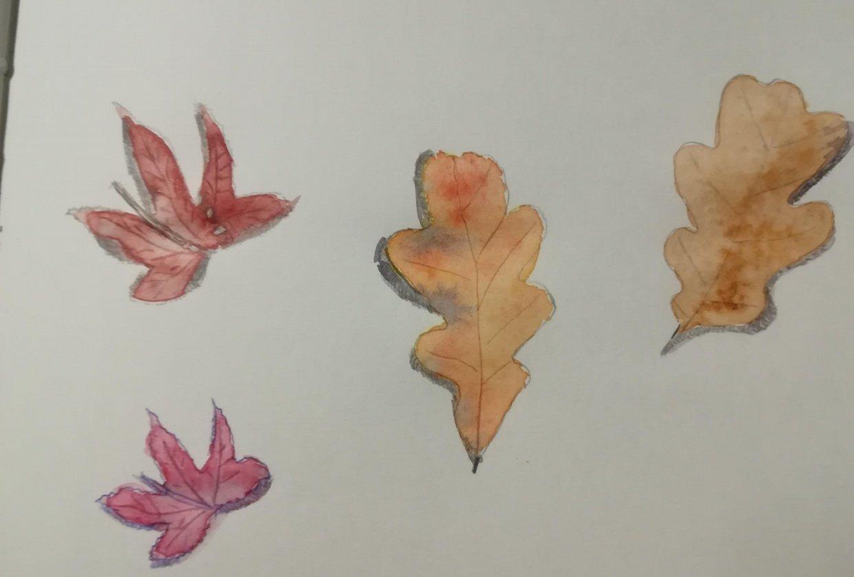 autumn leaves aquarel - student project