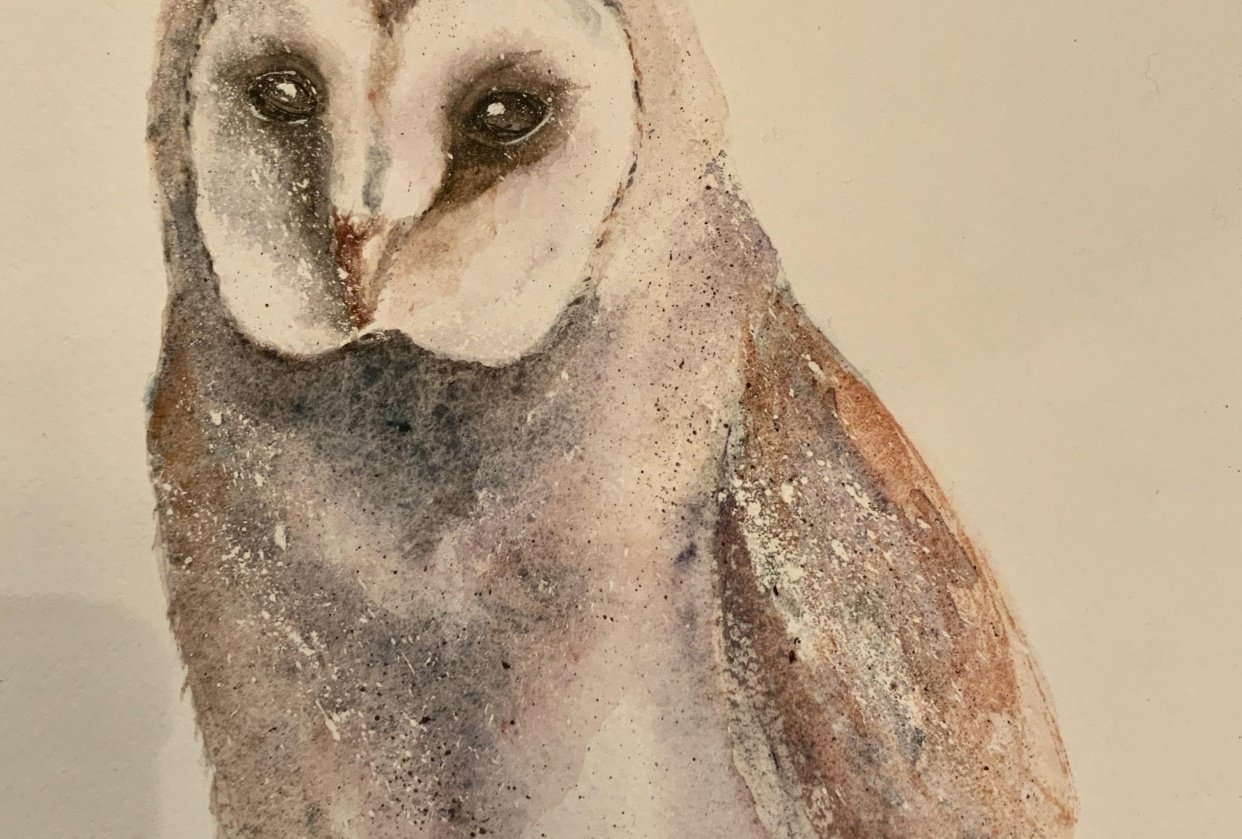 My owl! - student project