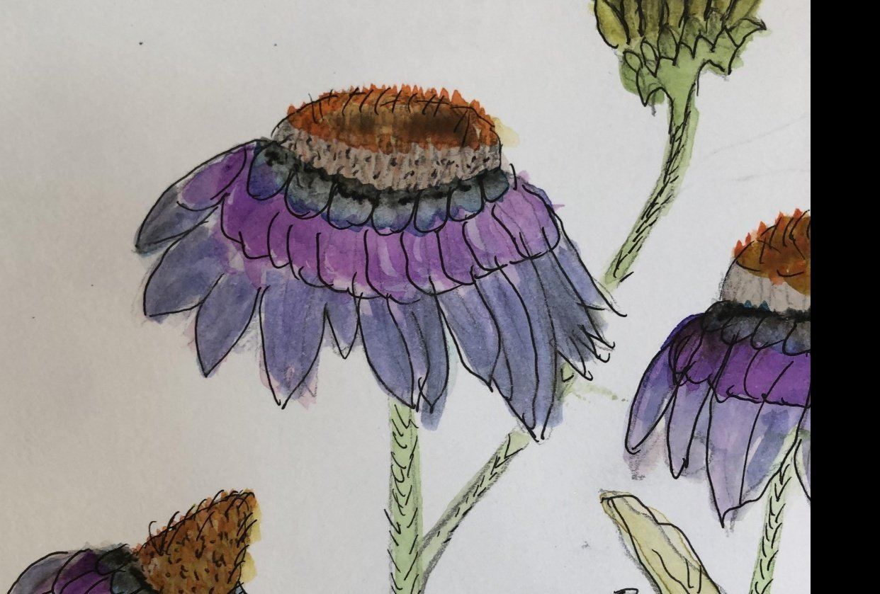 Flower study - student project