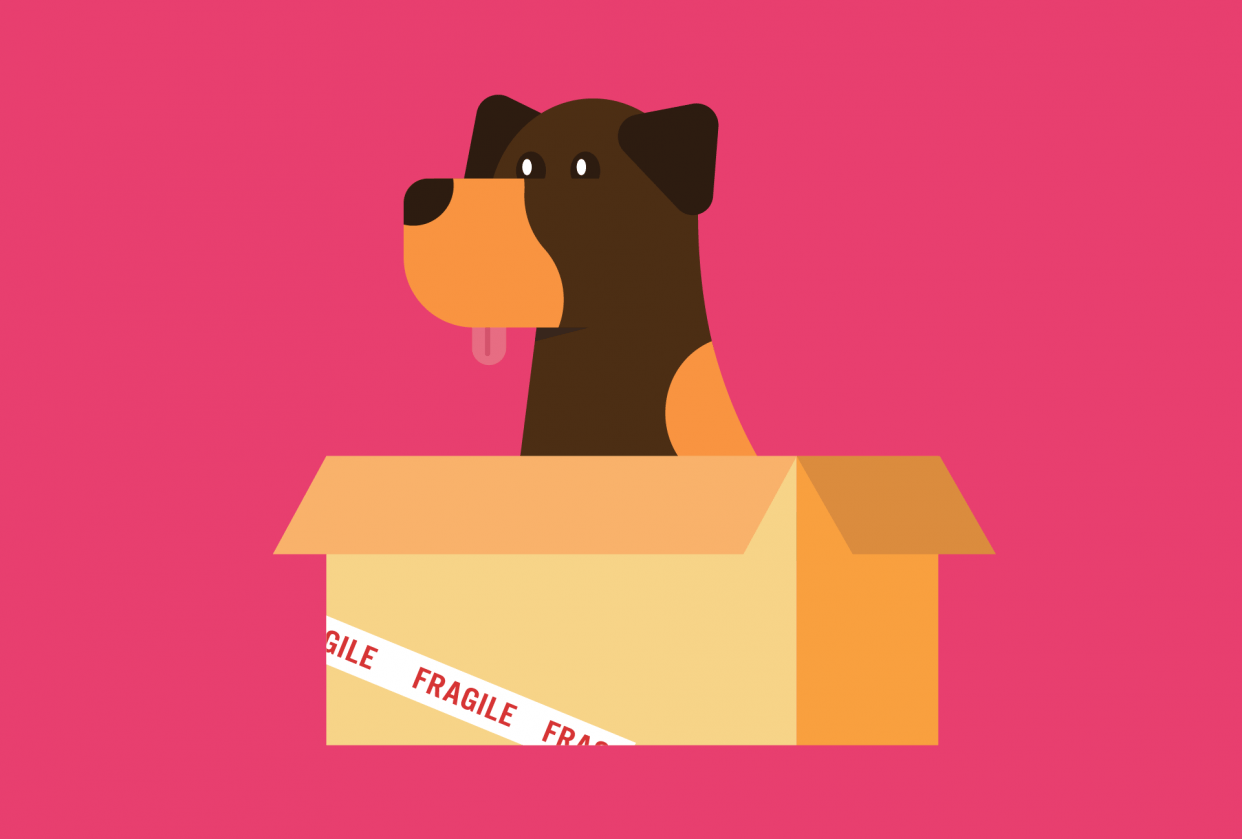 Doberman in a Box - student project