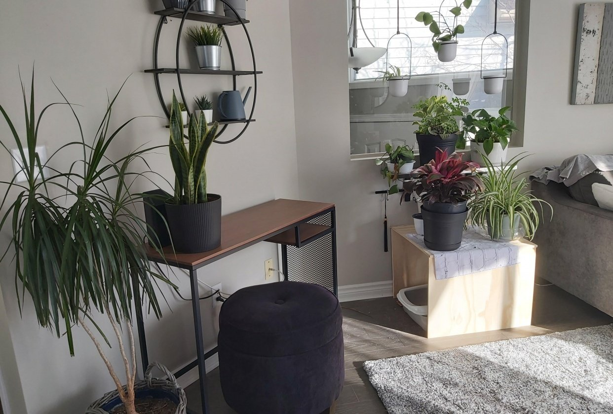 My new plant space - UPDATE :-) - student project