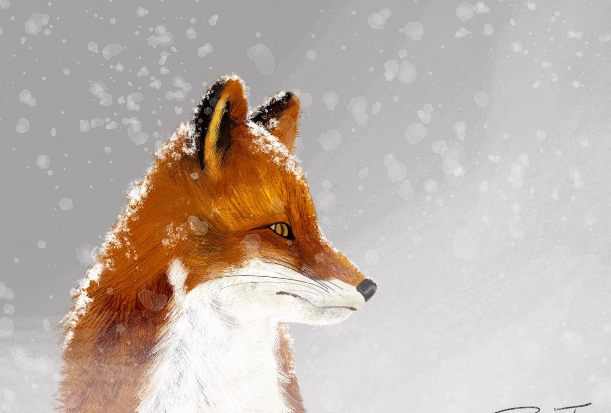 Fox & Flurries - student project