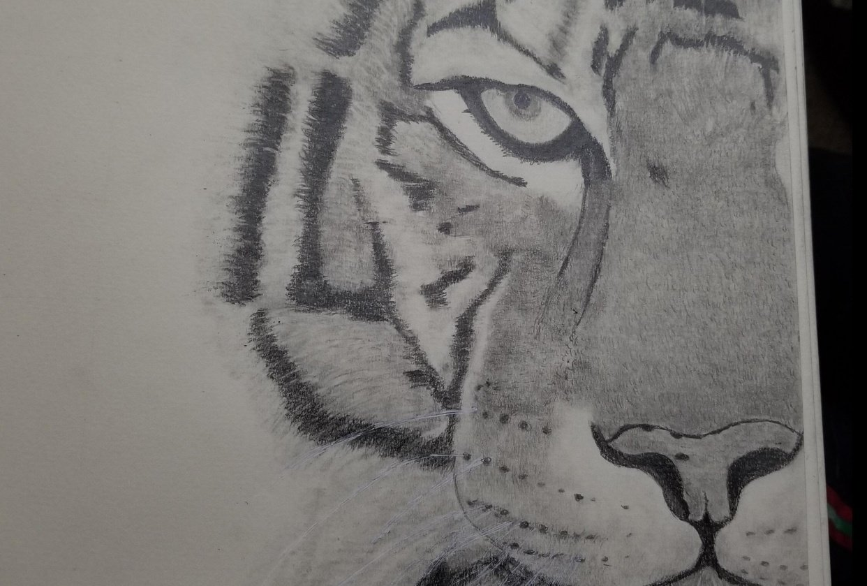 kitty graphite pencil - student project