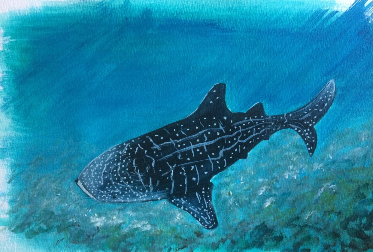 Sea Life in Acrylics - student project