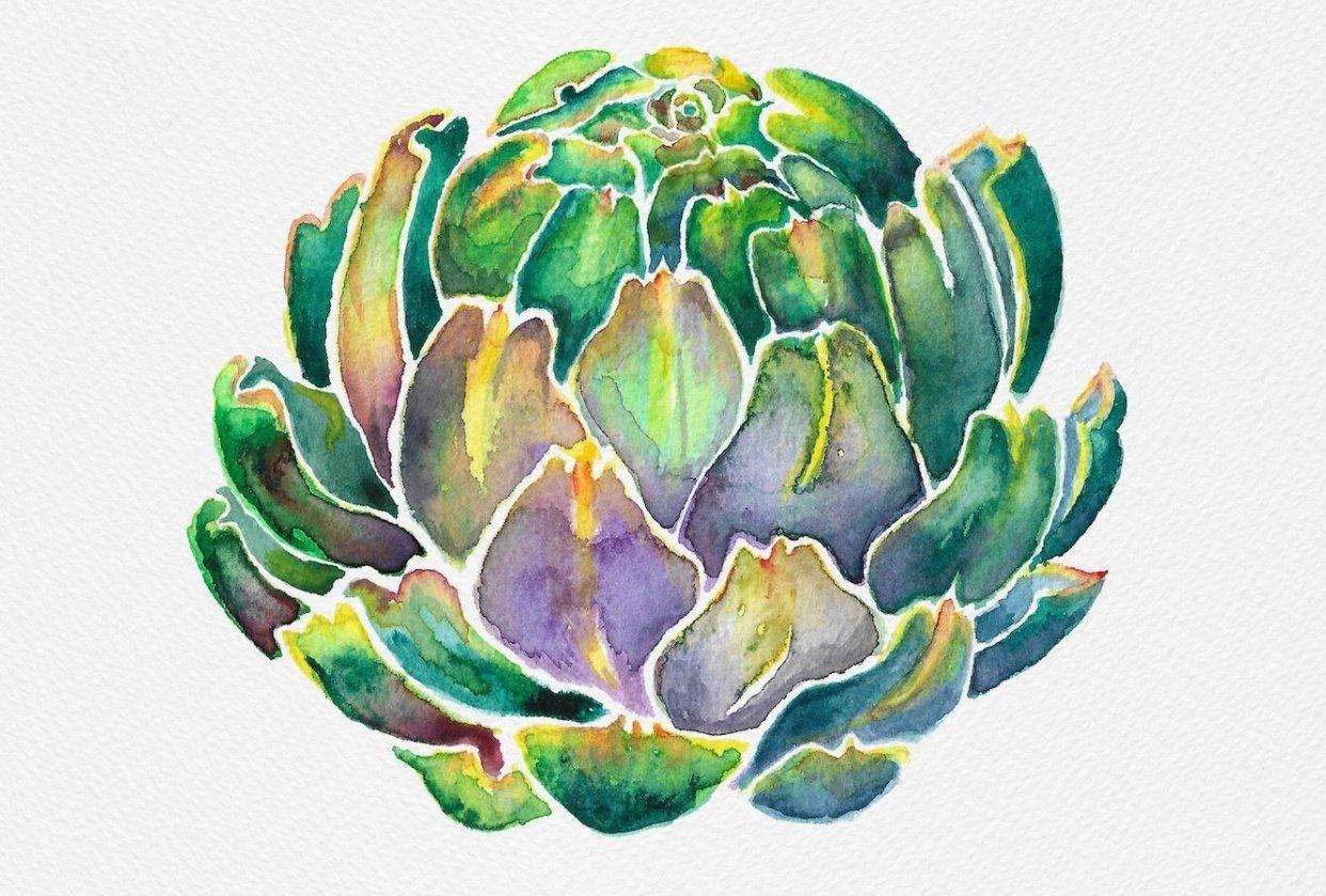 Watercolour artichoke - student project