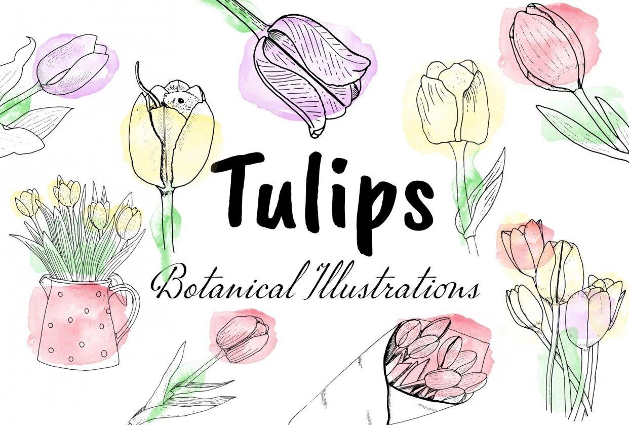 Tulip Illustrations - student project
