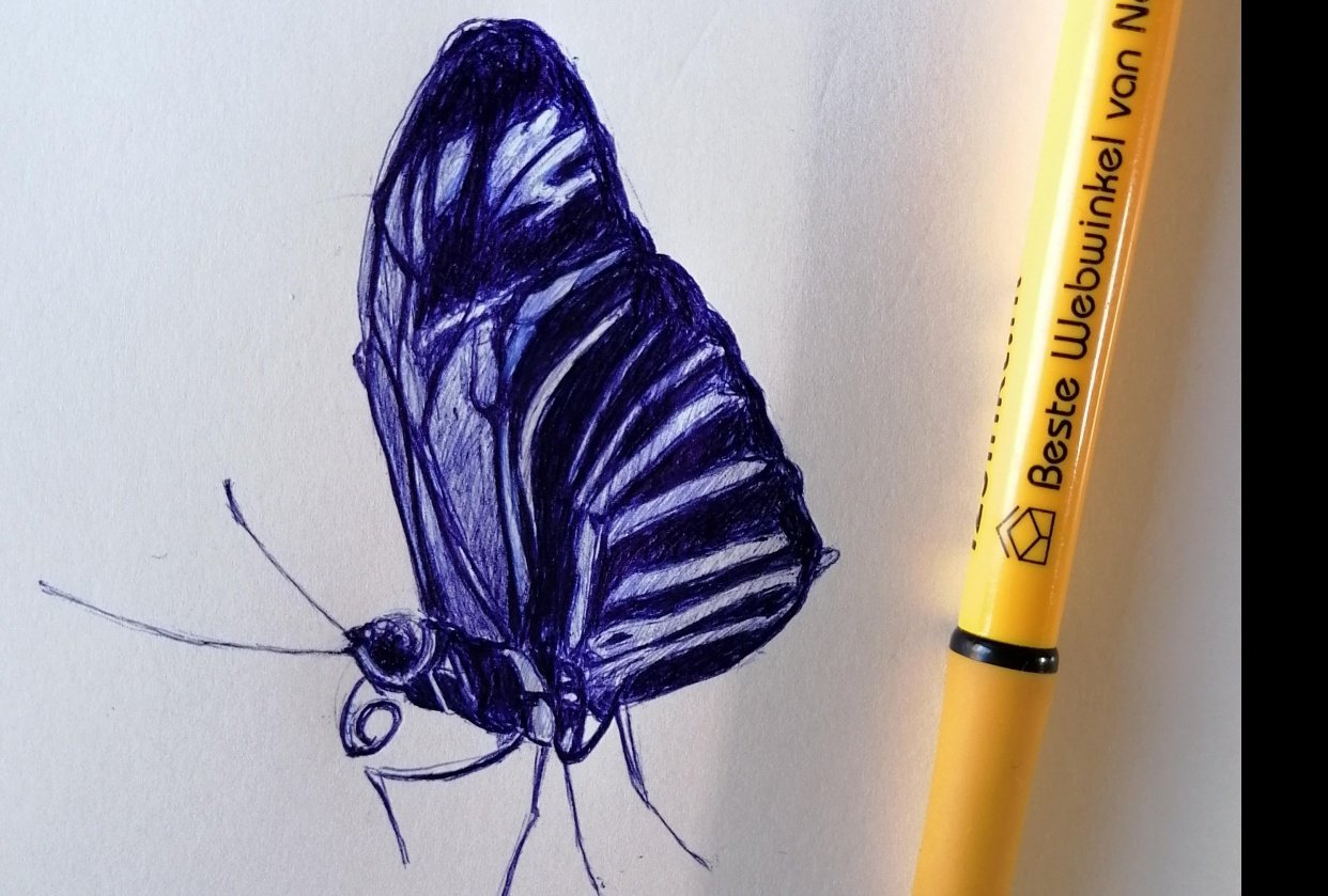Ballpoint Drawing butterfly - student project