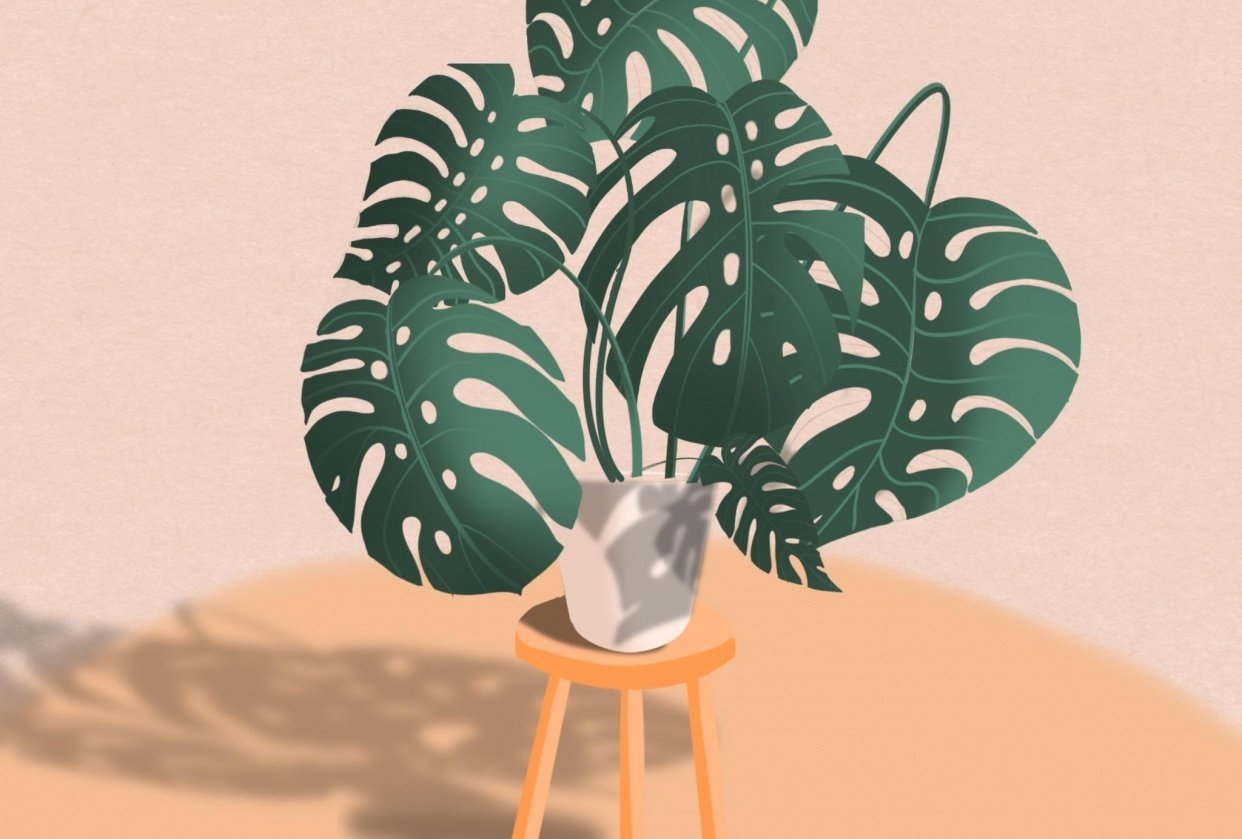 Monstera and Shed - student project