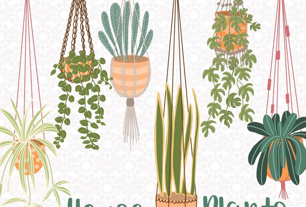 Hanging house plants - student project