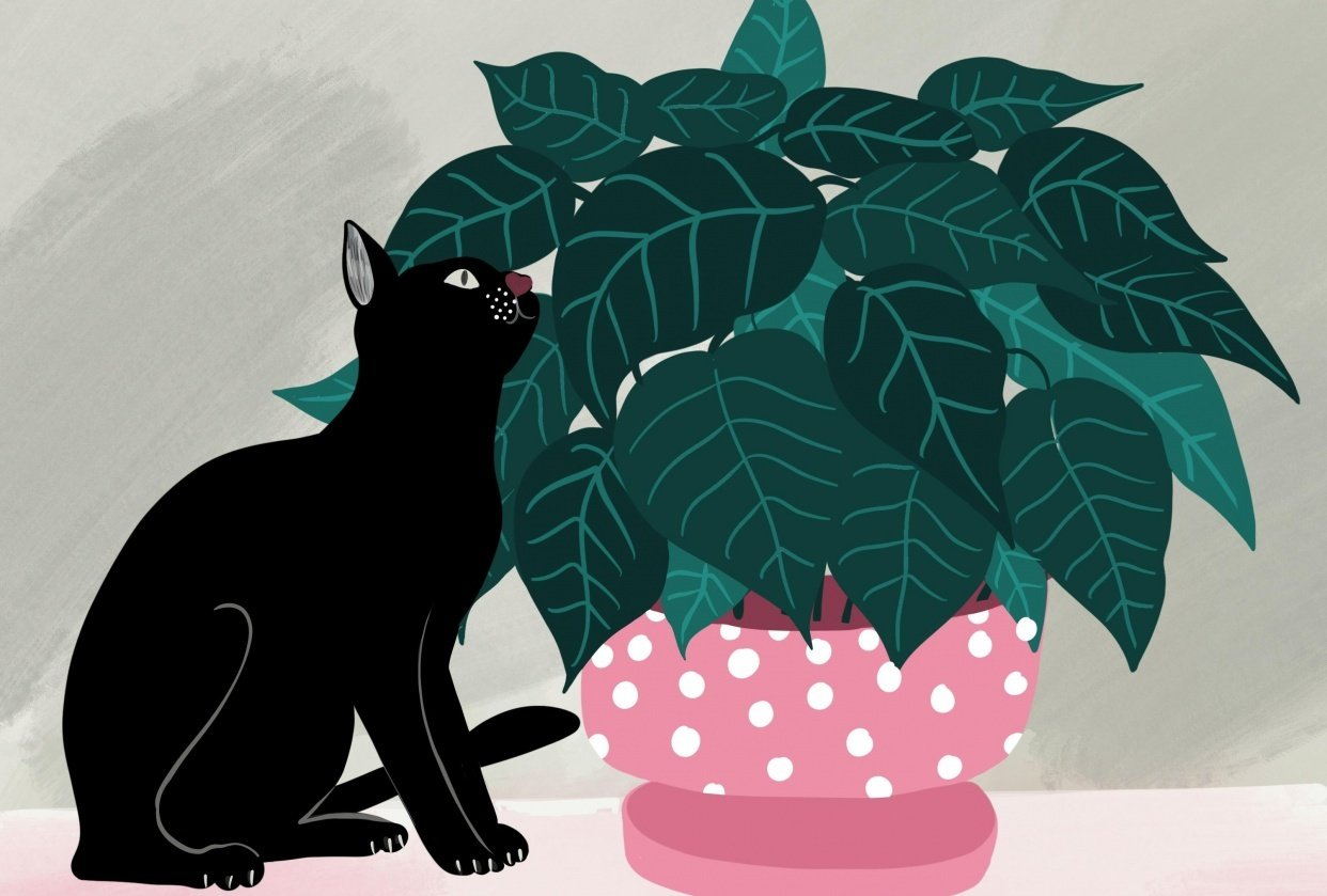 Cats and plants! - student project