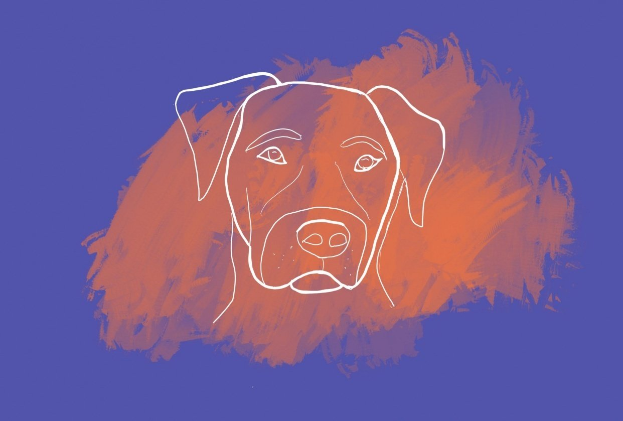 Pup a day - student project