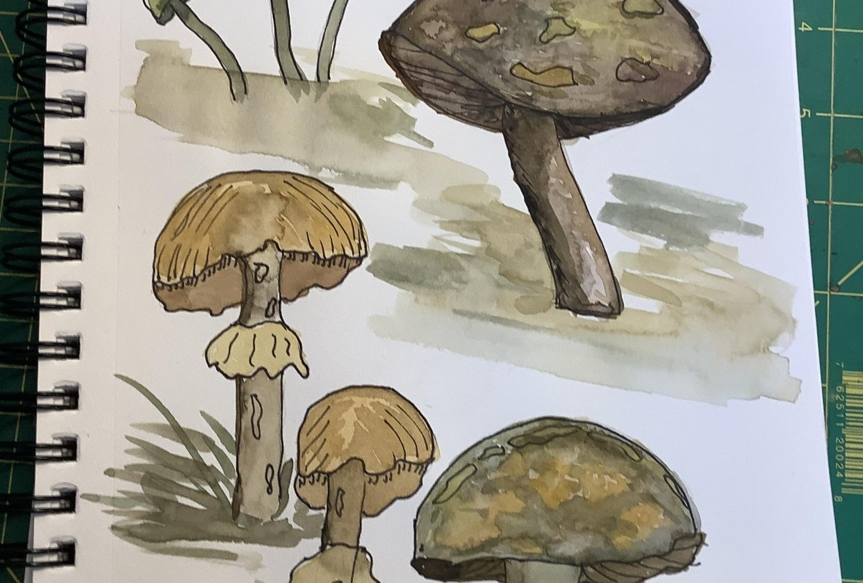 Funky mushrooms - student project