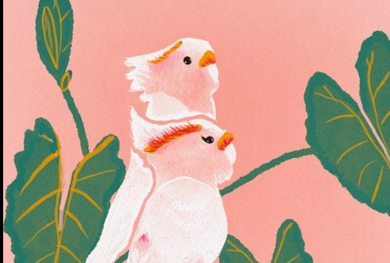 Cockatoos - student project