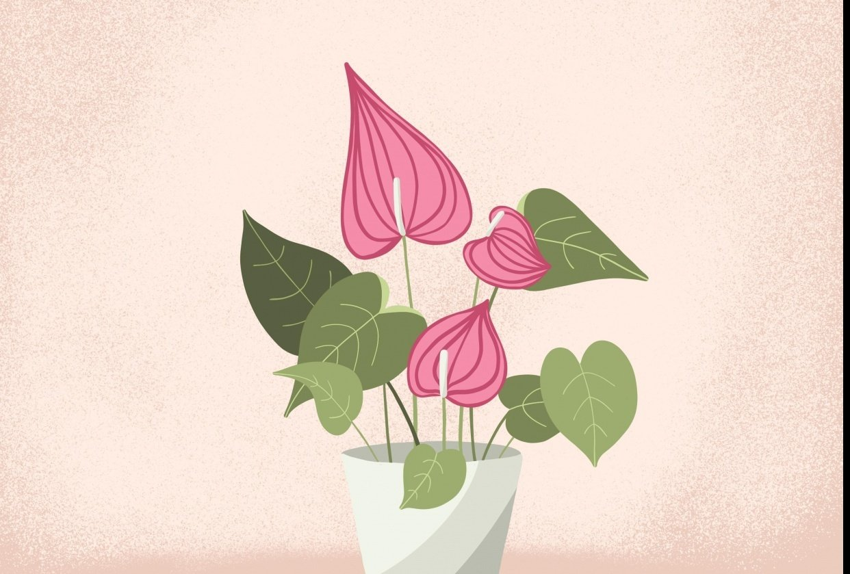 Plant Illustrations - student project