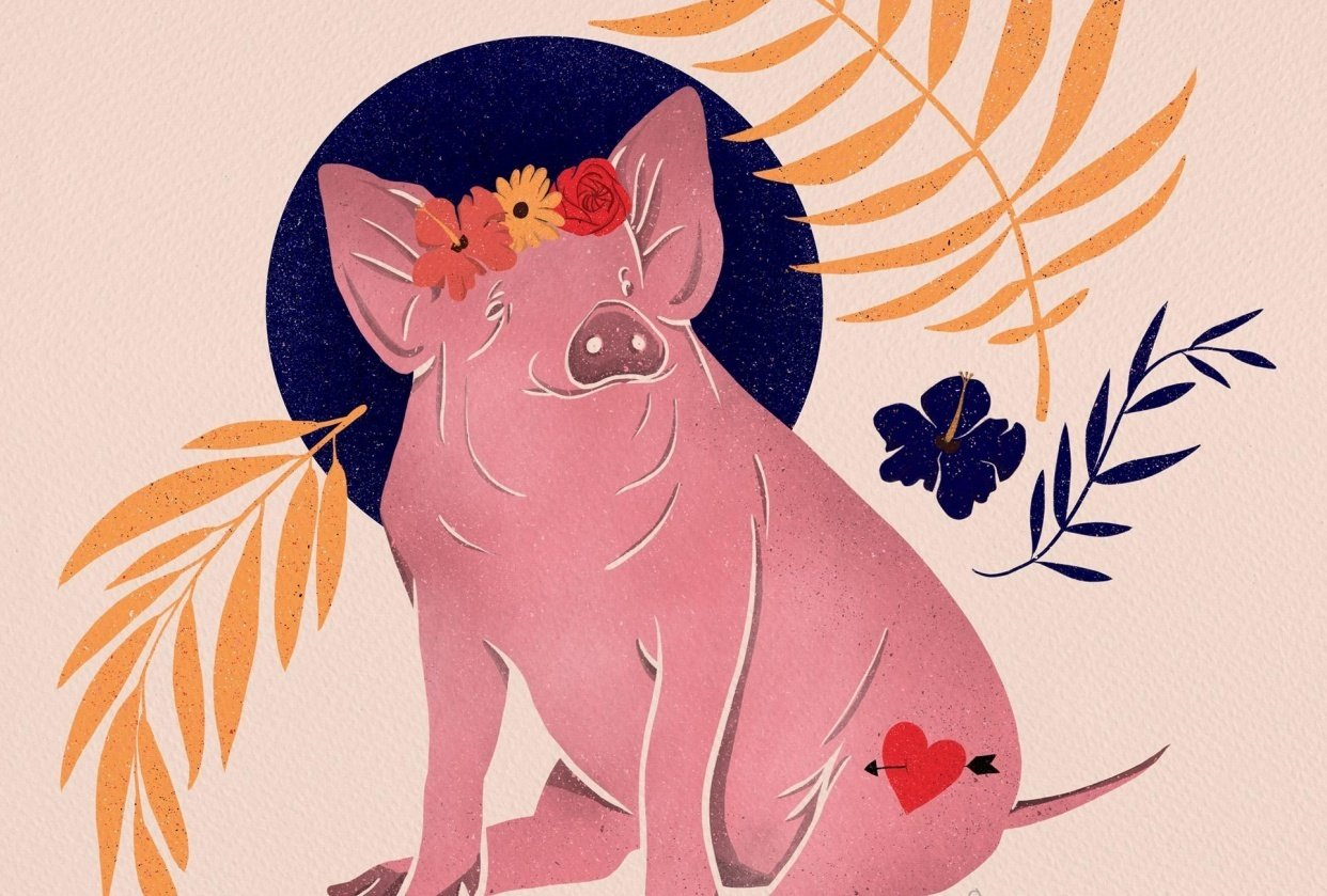 Lady Pig in the tropics - student project