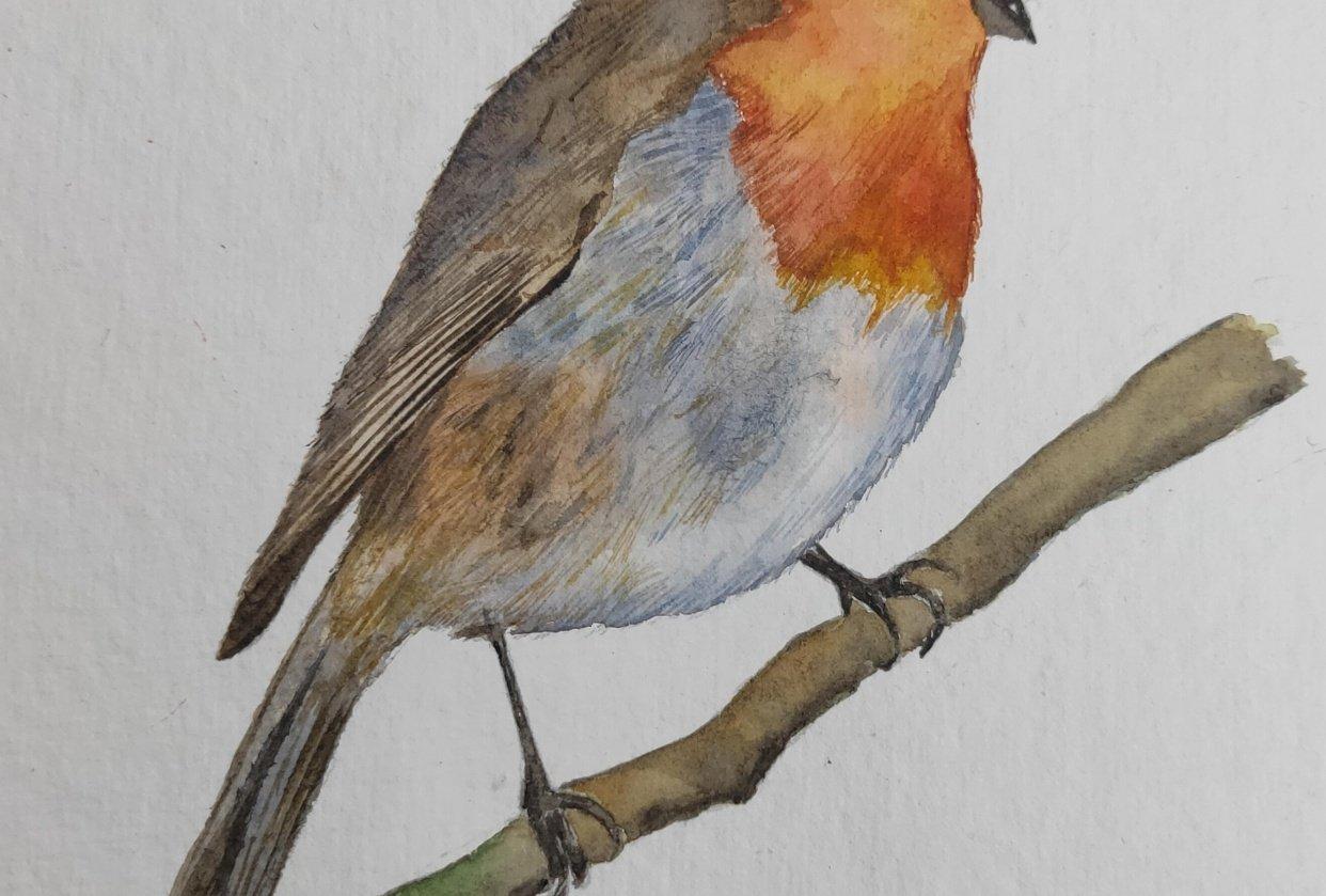 Watercolour Robin! - student project
