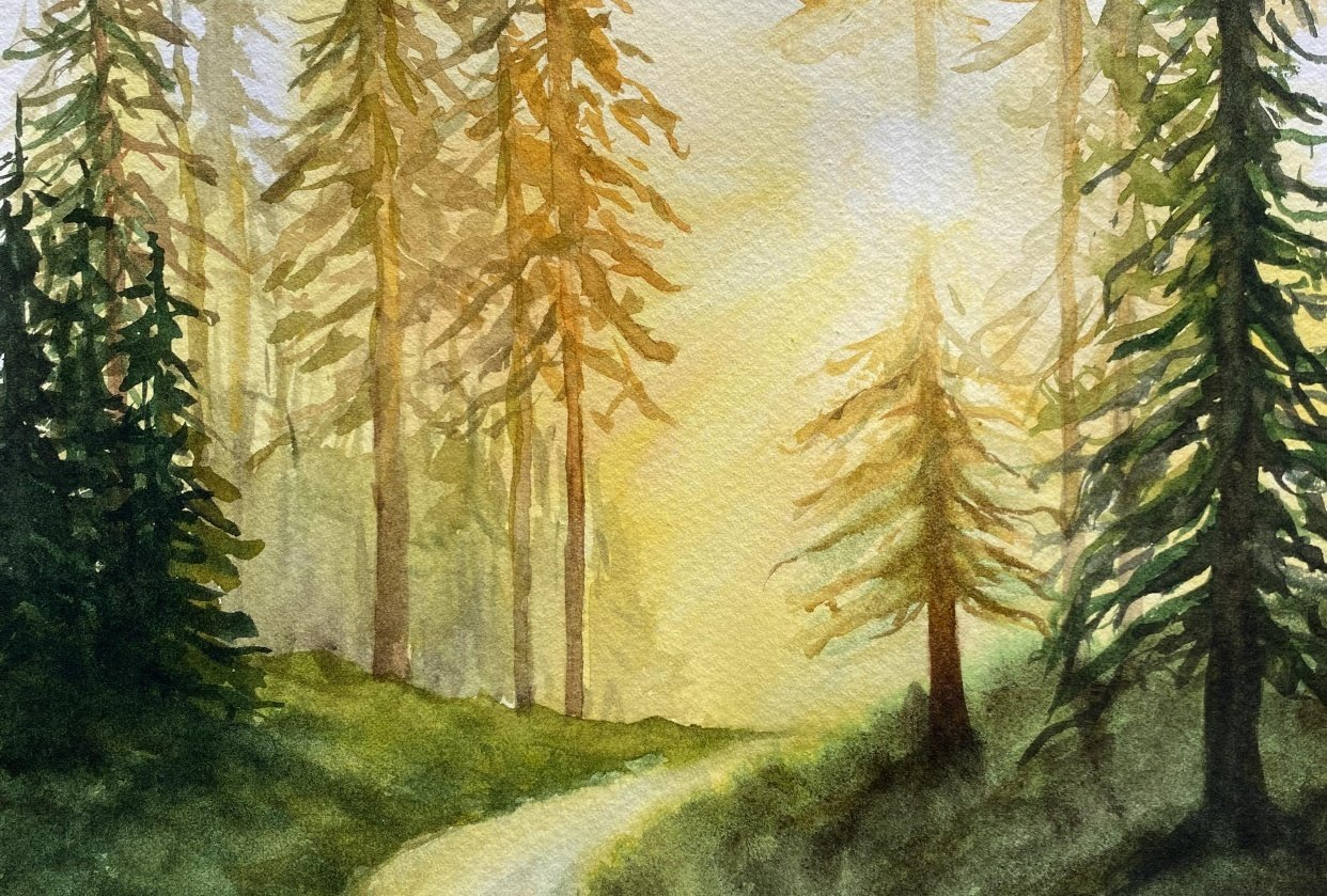 Forrest, sunlight and a dirt road - student project