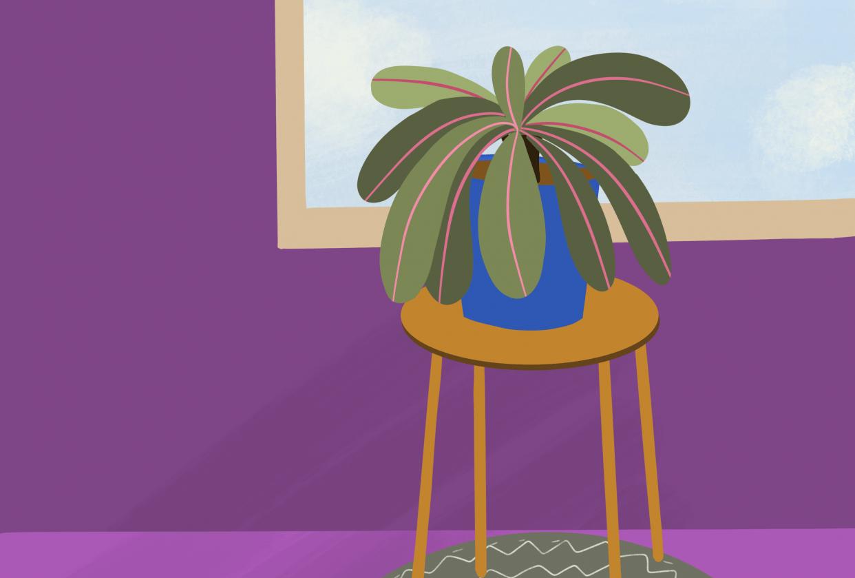 Purple Haze - student project