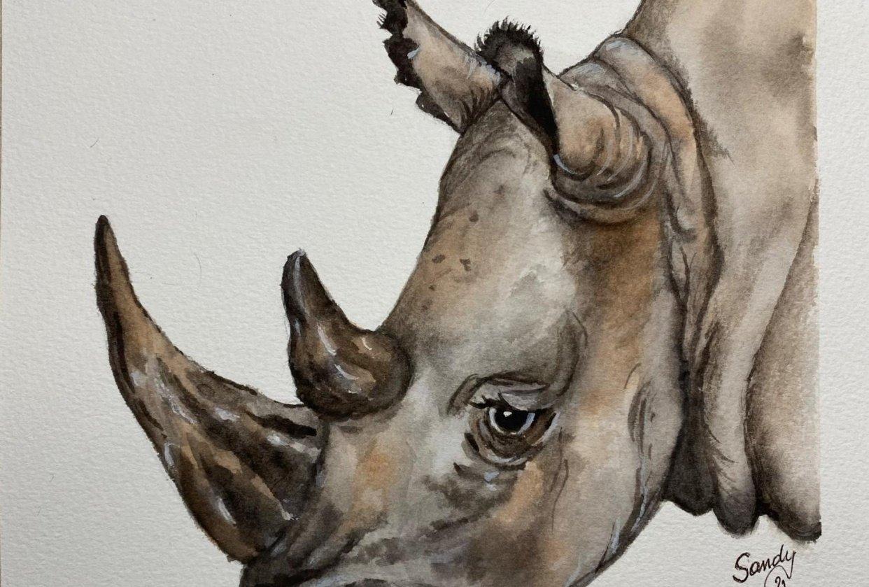 Lino the Rhino - student project