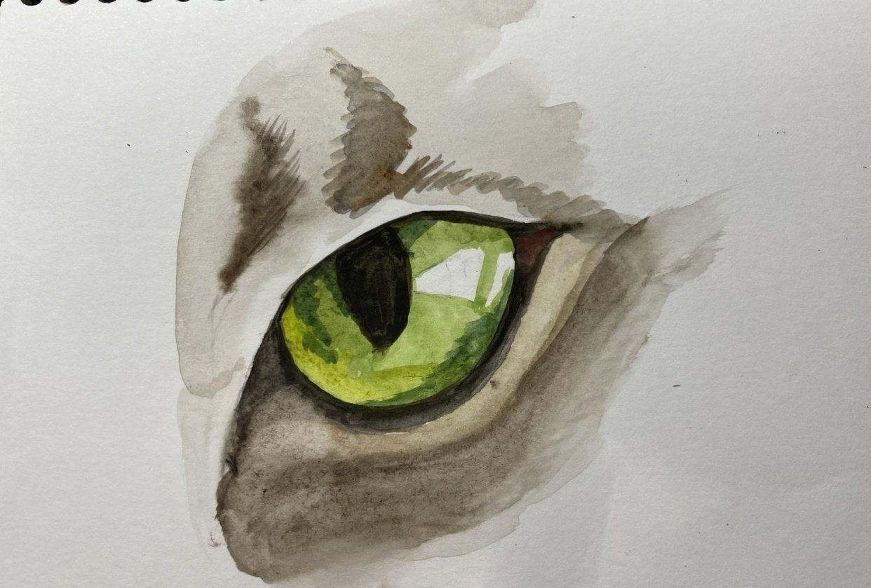 Cat eye - student project