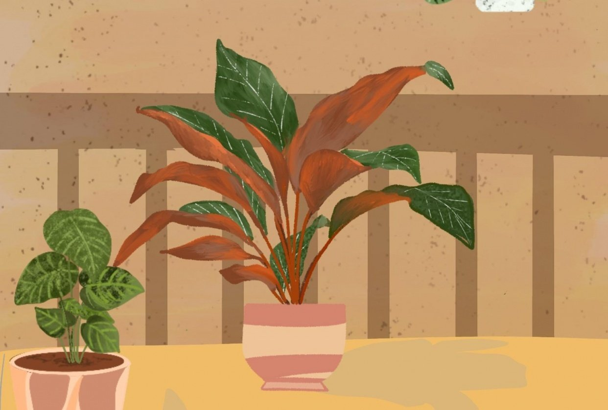 Plants in procreate - student project