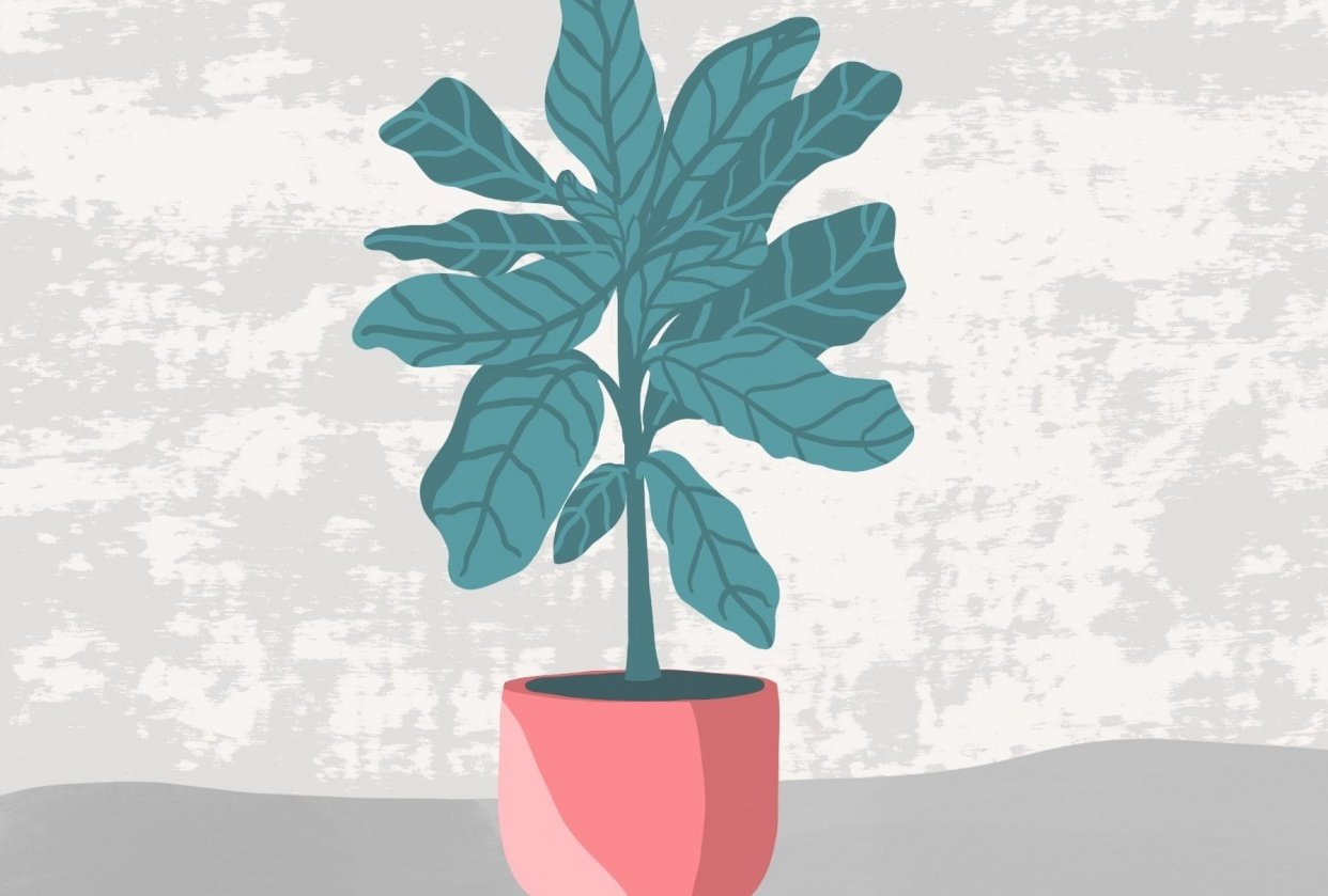Plant in the pot - student project