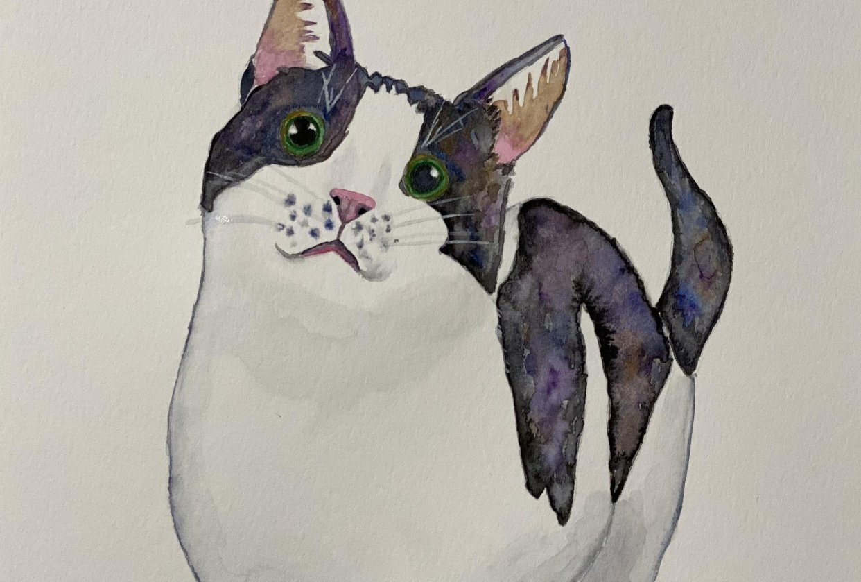 Black and white cat - student project