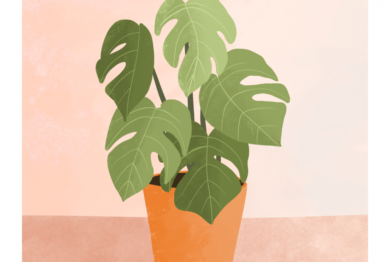 Monstera plant - student project