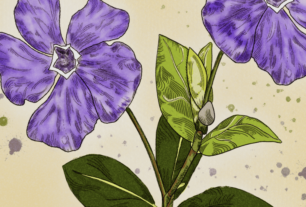 Periwinkle Purple - student project