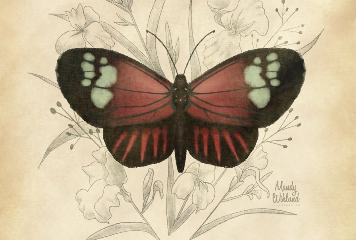 Scientific Butterfly Illustration - student project