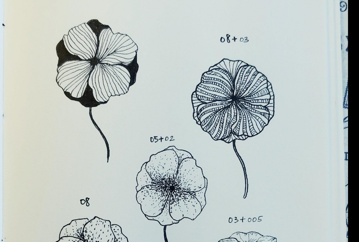 Line Drawings of Flowers | Virginia - student project