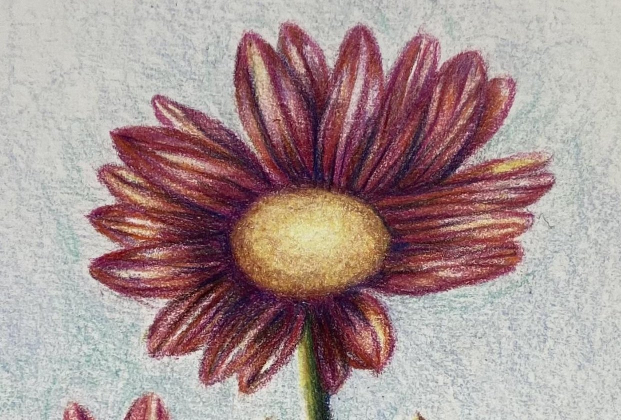 Simple Floral Beauties with Coloured Pencils - student project