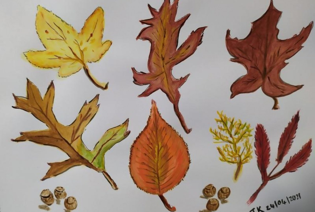 Autumn leaves for Urban nature journaling. - student project
