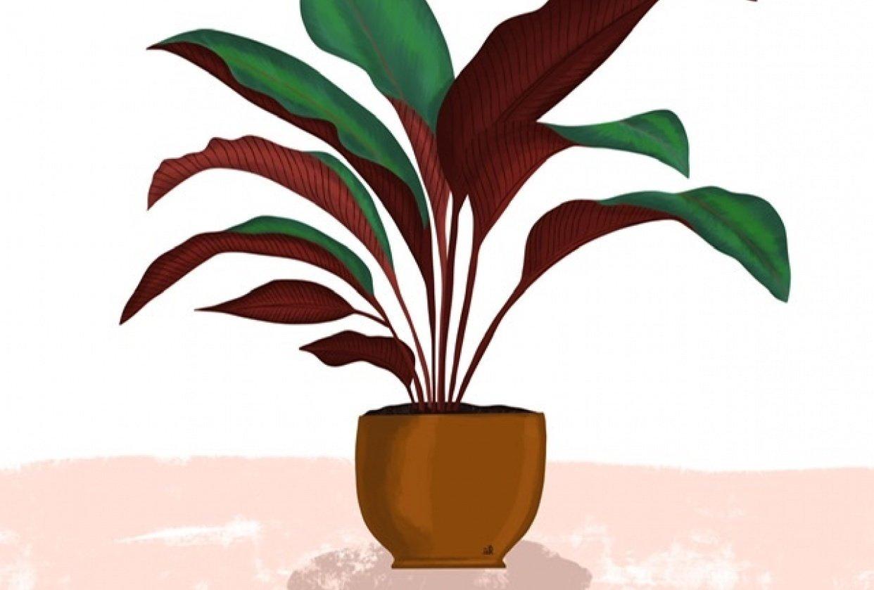 Plant illustration - student project