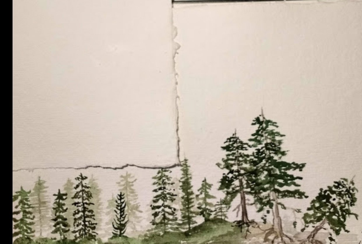 Pine Trees - student project