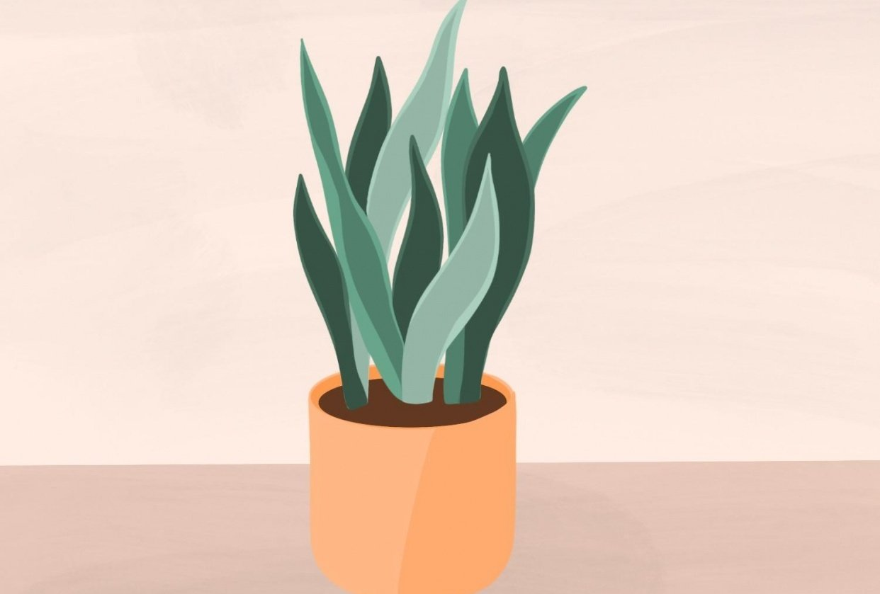 Snake Plant - student project