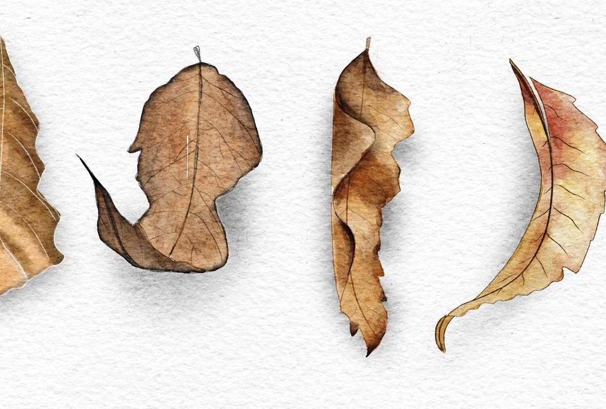 Autumn leaves - student project