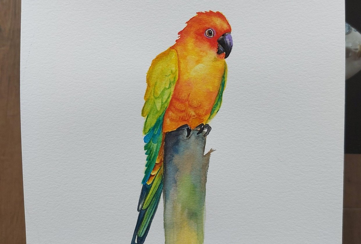 My first Sun conure - student project