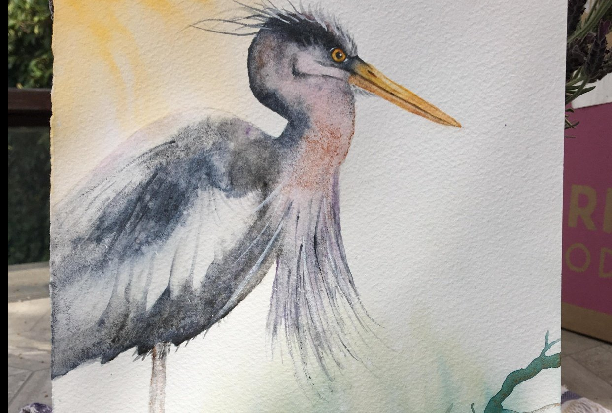 My angry heron - student project