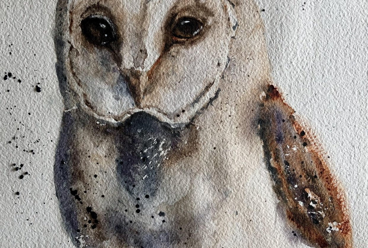 Owl - student project