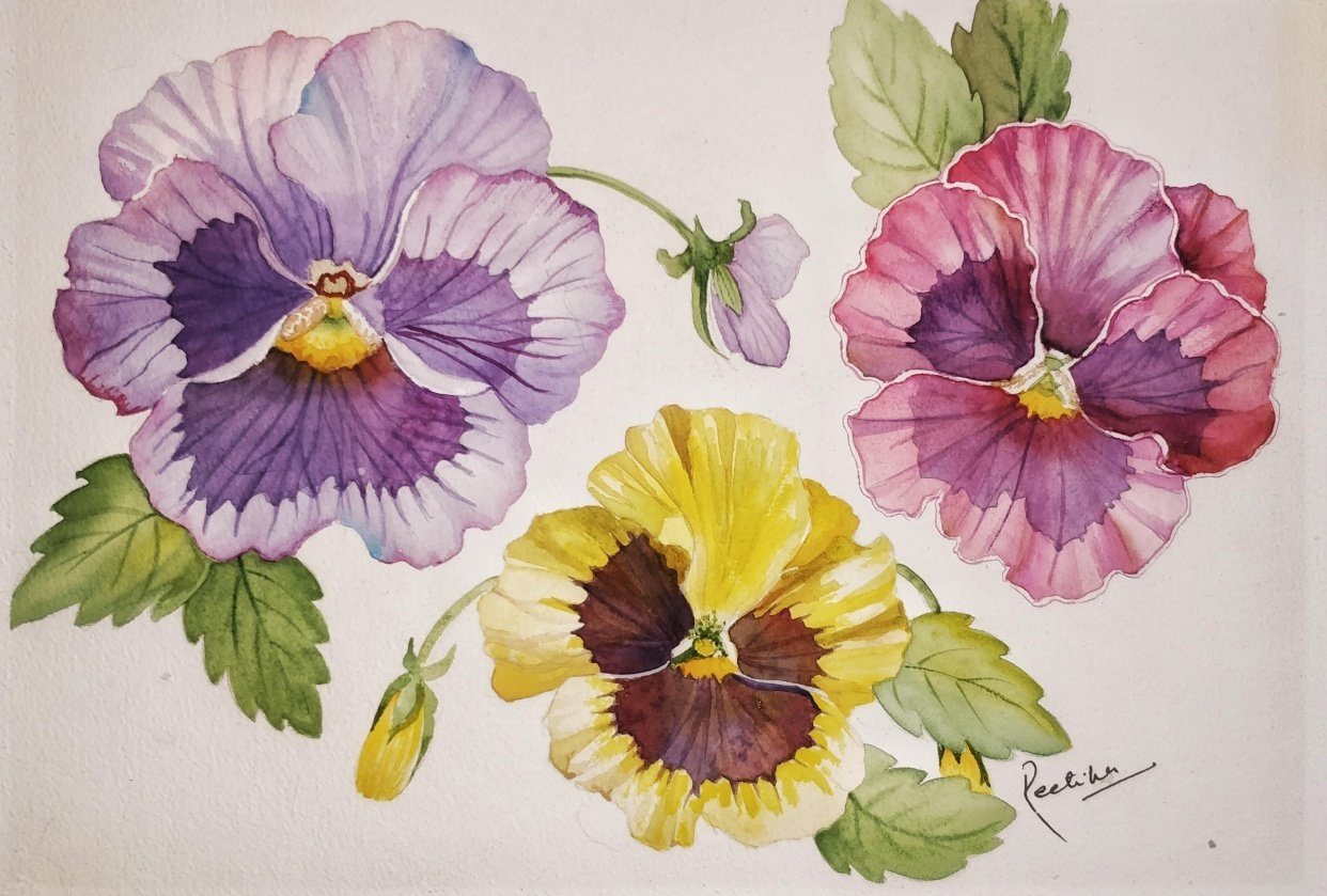 Pansies - student project